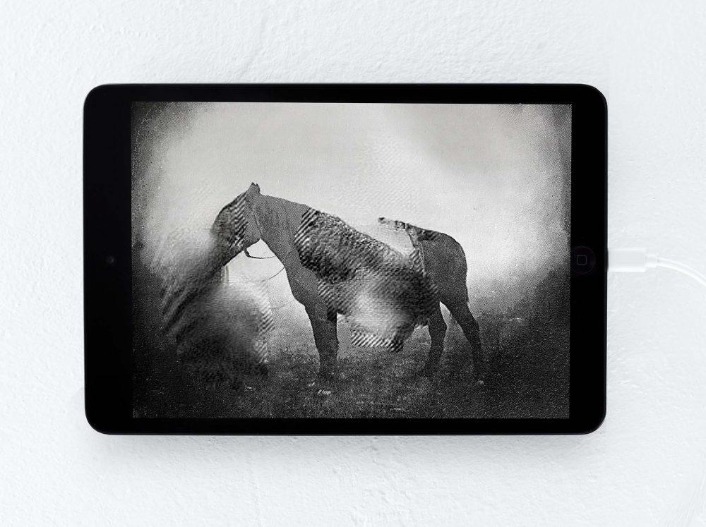 Roland Barthes Pferd